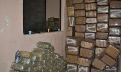 Decomisan 4 toneladas de marihuana en la Morelos