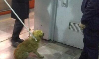 Rescatan a perrito en vías del Metro Nezahualcóyotl