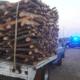 Diputados reforman ley para vigilar procedencia de productos forestales